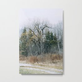 Forest view from the park Metal Print