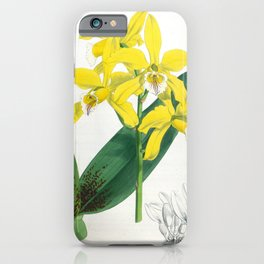 Laelia Xanthina Vintage Yellow Lindenia Orchid iPhone Case