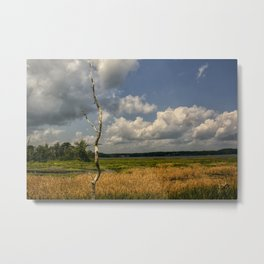 Salt Marsh Metal Print