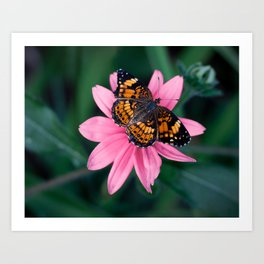 Black and Orange Butterfly on Pink Flower Art Print