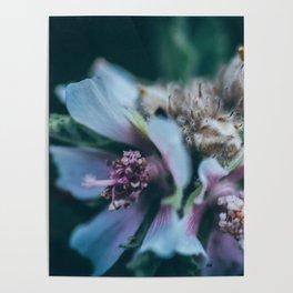Melancholic flowers Poster