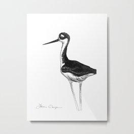 Black-necked Stilt Drawing Metal Print