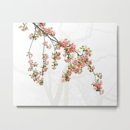 Pink and Green Apple Blossoms Metal Print