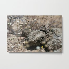Desert Horned Lizard Metal Print