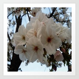 flower and light  - Cherry tree 1 Art Print