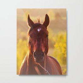 horse collection. Metal Print