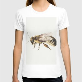 Bee from Sheet of Studies of Nine Insects (1660-1665) by Jan van Kessel T-shirt