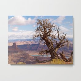 Twisted Juniper at Dead Horse Point Metal Print