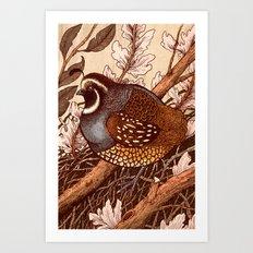 Little Quail Art Print