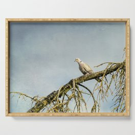 Eurasian Collared Dove Serving Tray