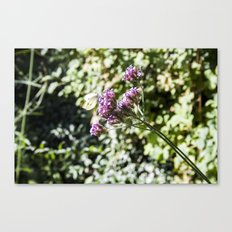 In the Garden.. Canvas Print