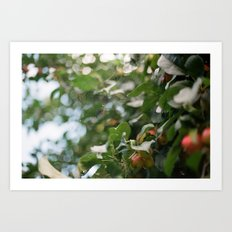 Crab Apple Tree Art Print