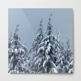 Frosted Winter Pine Trees Covered with Snow Metal Print