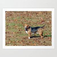 beagle Art Prints featuring Beagle by Frankie Cat