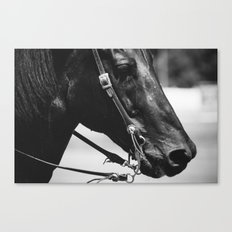 STEED Canvas Print