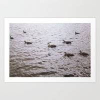 ducks Art Prints featuring Ducks by Kiara Rose