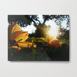 Hello Spring, Flowers and Sunset, photo Metal Print