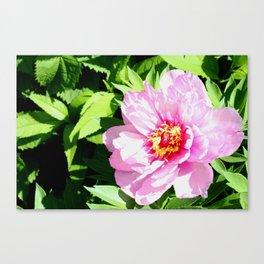 Plethora of Pink Petals Canvas Print