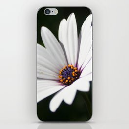 Daisy flower blooming close-up iPhone Skin
