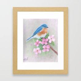 blue bird and dogwood Framed Art Print