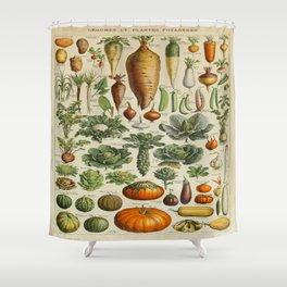 VEGETABLES Legumes Et Plantes Potageres Vintage Scientific Illustration French Language Encyclopedia Shower Curtain