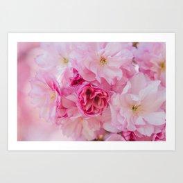 Cherry Blossom Bloom Art Print
