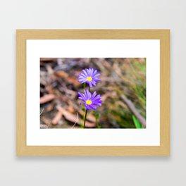 Native Australian flowers Framed Art Print