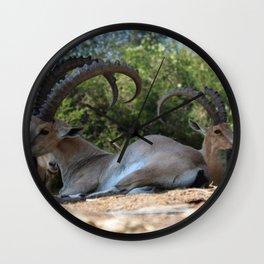 Israeli Ibex Wall Clock