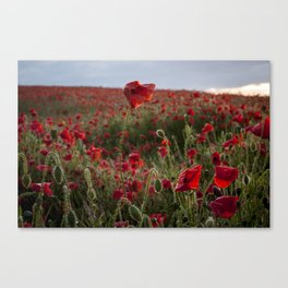 Rise above the rest Canvas Print