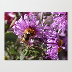 Busy Bee on a Violet Flower Canvas Print