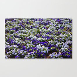 Pansies Bring Color To The Garden Canvas Print