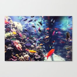 tropical Canvas Print