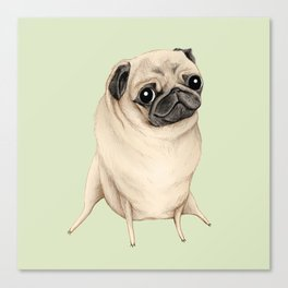 Sweet Fawn Pug Canvas Print