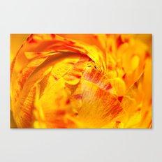 ranunculus red/orange Canvas Print