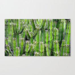 Cactus Mania Canvas Print