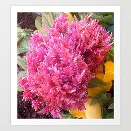 A Pink Celosia Art Print