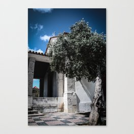 Olive Tree Canvas Print