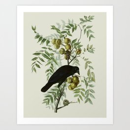 Vintage Crow Illustration Art Print