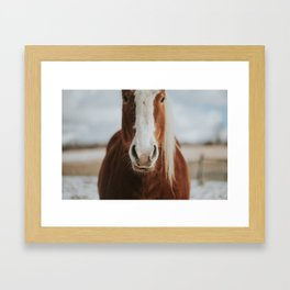 Horse in the wild Framed Art Print