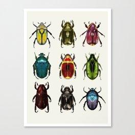 Scarab Beetles Canvas Print