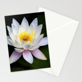 White Water Lily Stationery Cards
