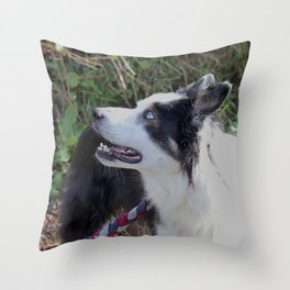 Collie Sheep Dog Throw Pillow