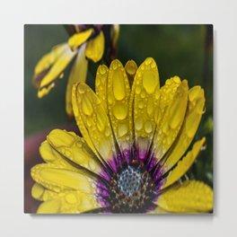 Droplets of Color Metal Print