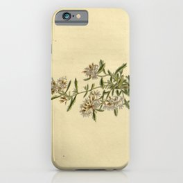 Flower lobelia corymbosa23 iPhone Case
