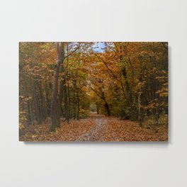 Autumn forest II Metal Print