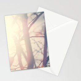 Sun light through tree branches-Santa Fe, NM Stationery Cards