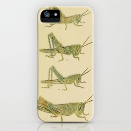 Naturalist Grasshoppers iPhone Case