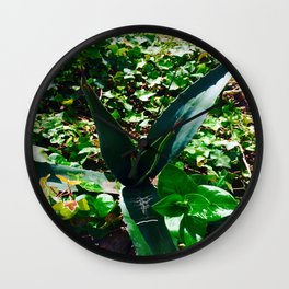 Aloe Vera at the top of Mount Monserrate in Bogota, Colombia Wall Clock