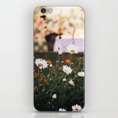 Everything's coming up daisies iPhone & iPod Skin