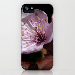 japanese cherrytree-blossom on black -2- iPhone Case